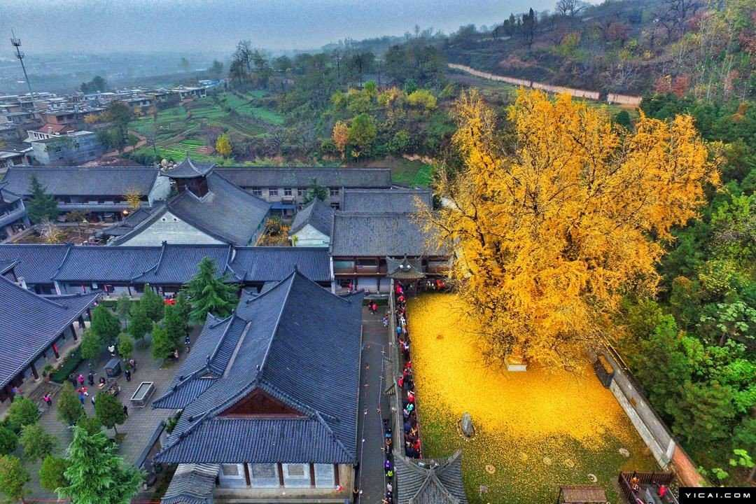 0 19db95 2e036211 orig Foto Gump do dia: O esplendor da Árvore de Ouro, na China