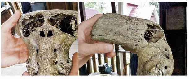 ady9 O mistério dos crânios bizarros descobertos nas montanhas da Russia