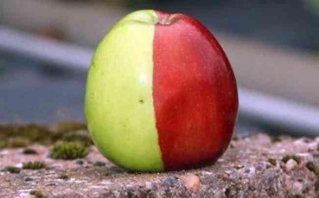 Unusual-Apples-8-650x404