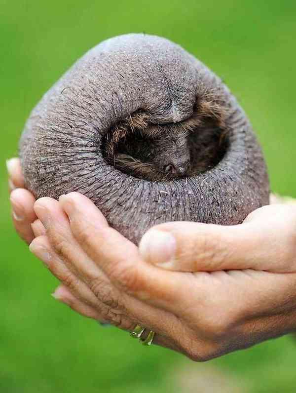 Incríveis animais... Carecas