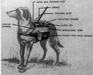 Os cães anti-tanque: A anatomia de um fracasso