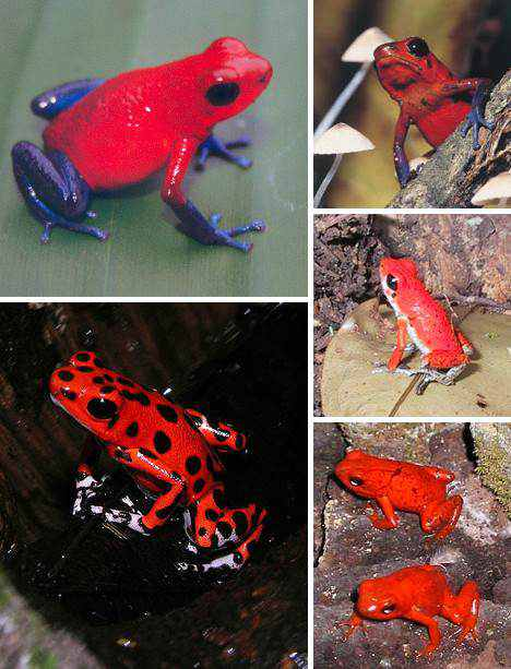 Animais vermelhos