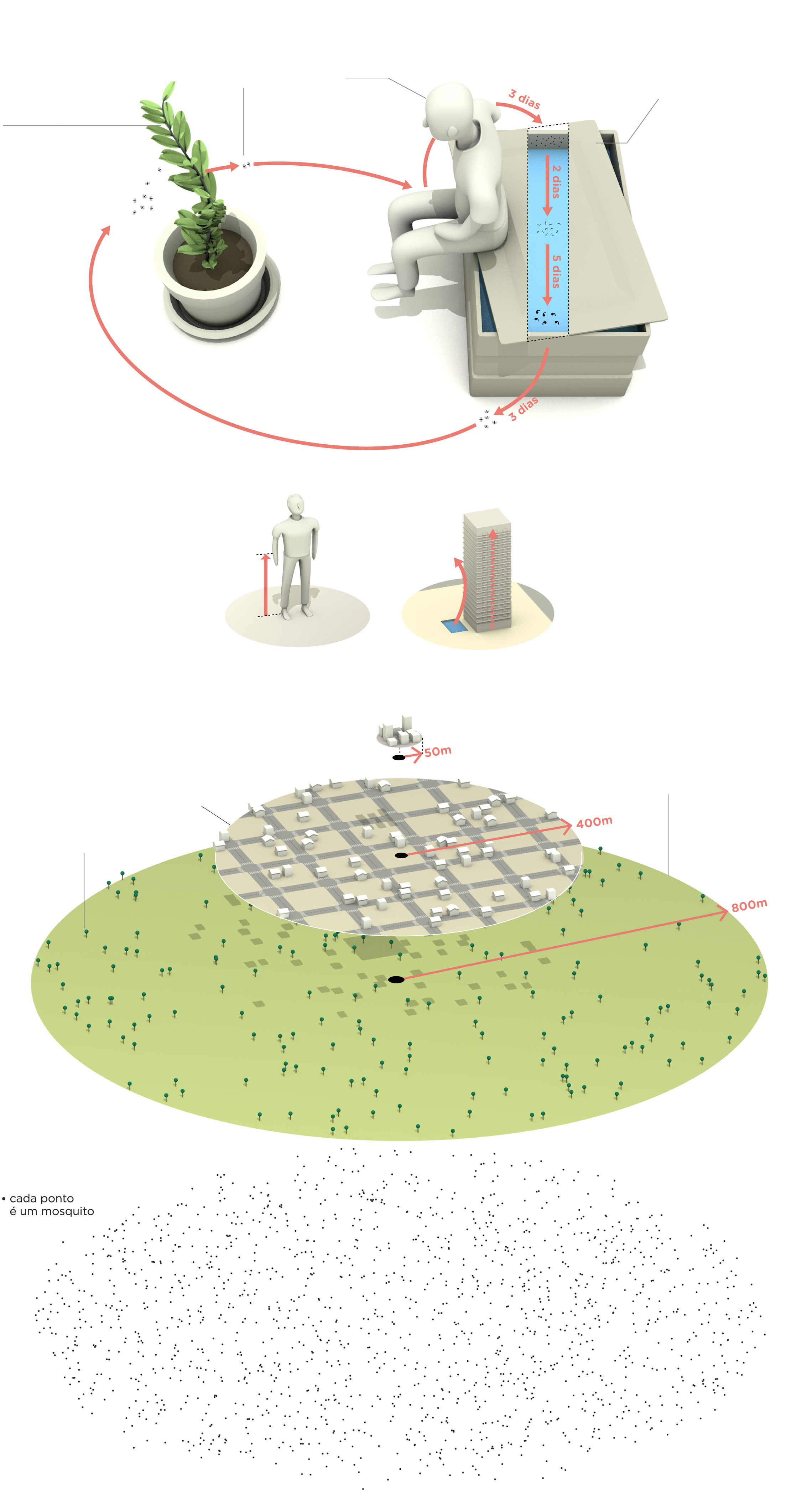 ciclo de vida mosquito aedes aegypti