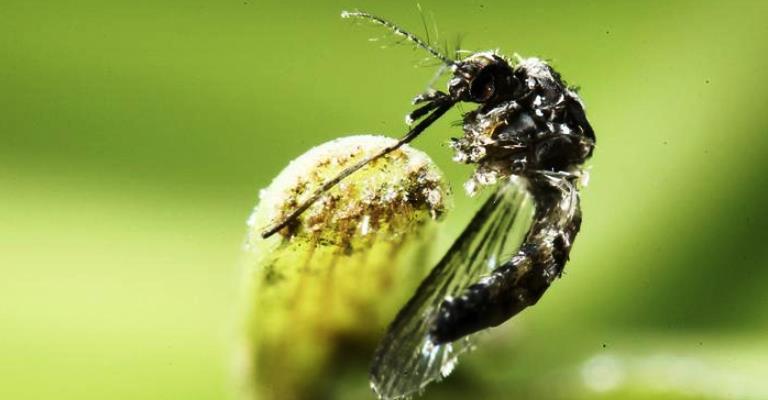 Anunciado o fim da emergência por zika e microcefalia