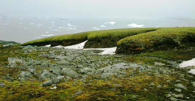 Antártida está ficando verde