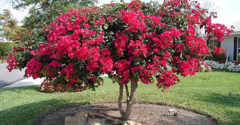 As flores mais indicadas para cultivo na primavera