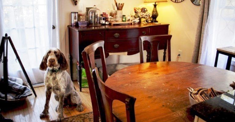 Como manter o apartamento organizado tendo um cachorro ou gato
