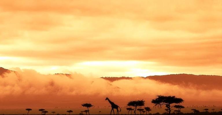 Pelas savanas da África