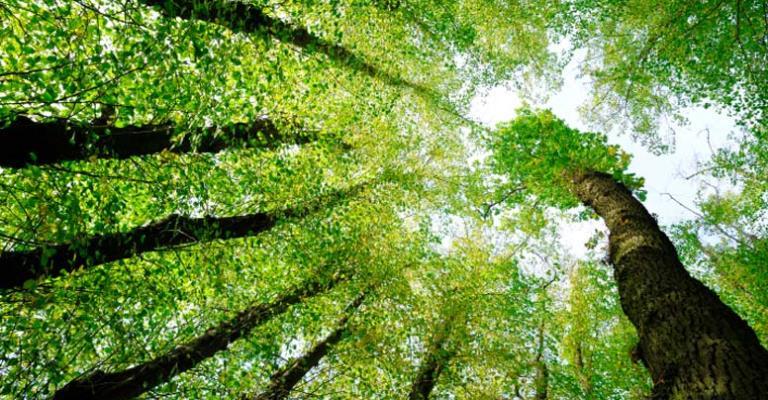 Brasil lidera ranking de mortes de ambientalistas