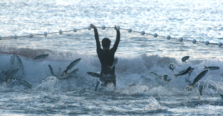 Pesca da tainha é tema de mostra fotográfica