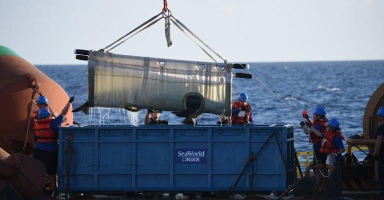 Baleia reabilitada é devolvida com sucesso ao oceano