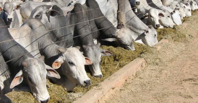 Brasil faz ação para promover carne bovina na Europa