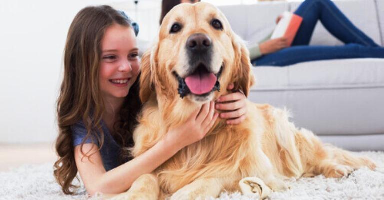 App encontra cuidador para o seu pet quando for viajar