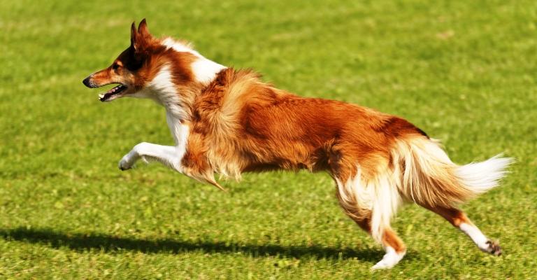 Atividades físicas: seu pet saudável e alegre
