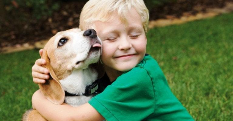 Vai adotar um amigo para seu filho?