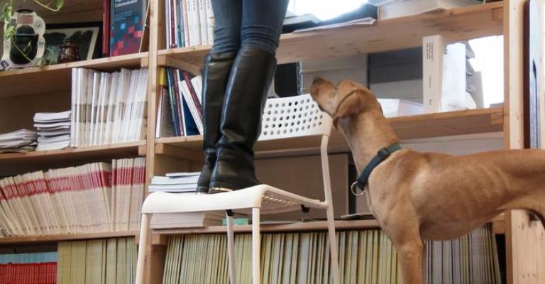 Cuidado: seu cachorro está observando você!
