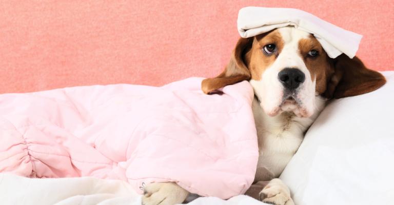 Animais de estimação custam R$189 por mês em média