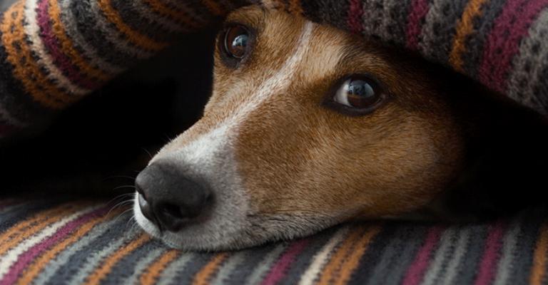 Cães e gatos precisam de cuidados no inverno