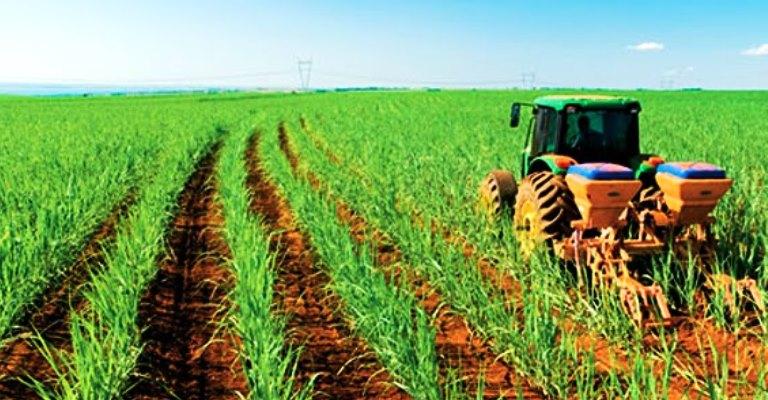 Produção de cana-de-açúcar deve ter queda de 1,7%