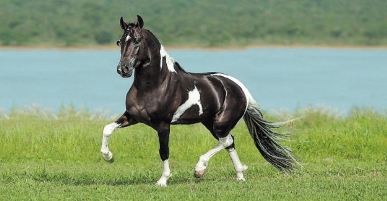 Equinos movimentam R$ 7,2 bi ao ano no Brasil
