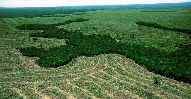 Desmatamento avança, mesmo em áreas protegidas