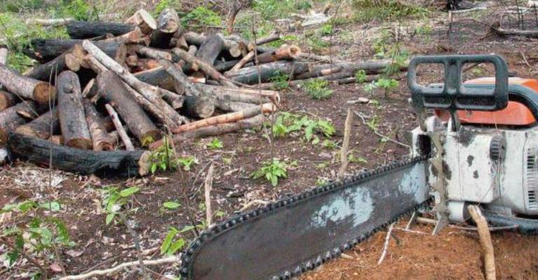 Desmatamento na Amazônia cai 16% em 12 meses