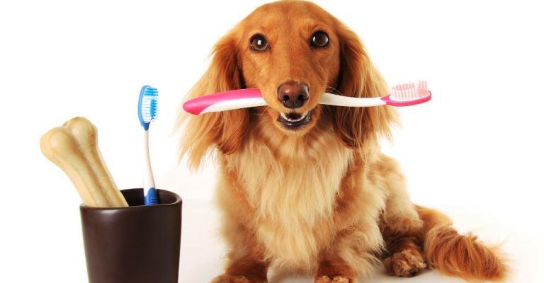 A saúde dos pets também começa pela boca!