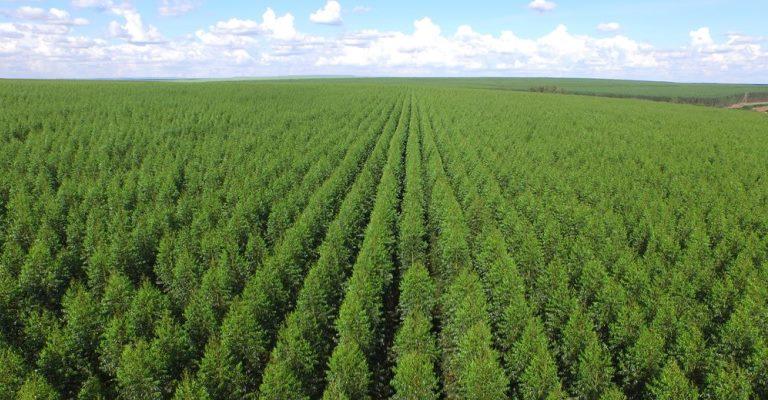 Brasil tem 9,85 milhões de hectares de florestas plantadas