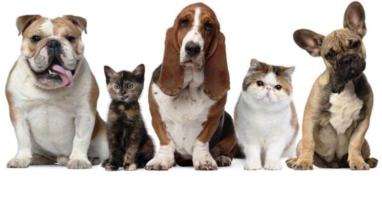 Ponteio Lar Shopping realiza Feira de Adoção de Cães e Gatos