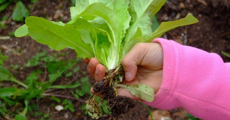 A importância do ensino ambiental na prática