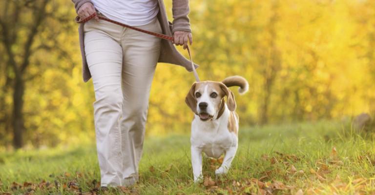 Pets fazem bem para a saúde dos idosos