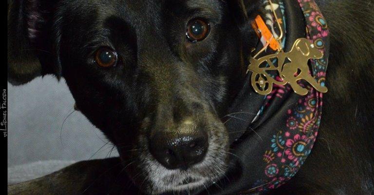 Ensaio fotográfico com pets em prol de animais com deficiência