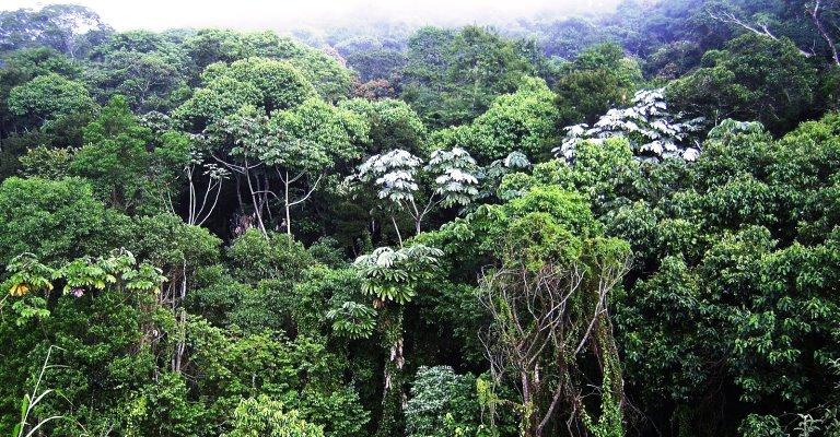 Brasil apresenta avanços em convenção sobre biodiversidade