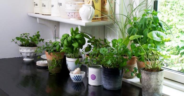 Aplicativo auxilia no cuidado de hortas caseiras