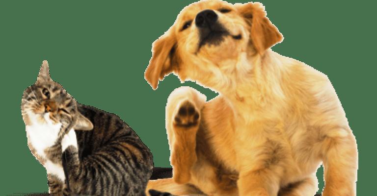 7 dicas para previnir seu pet de pulgas e carrapatos