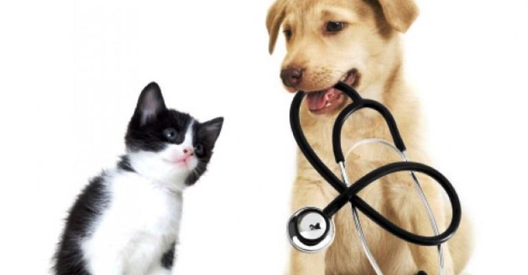 Quem vai mais ao veterinário: cão ou gato?