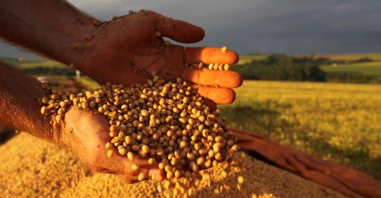 Safra de grãos pode ter novo recorde em 2017, diz IBGE
