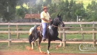 Equídeo Equino Mangalarga Marchador Registrado Cavalo Pampa Marcha Picada - Pastar Imagens