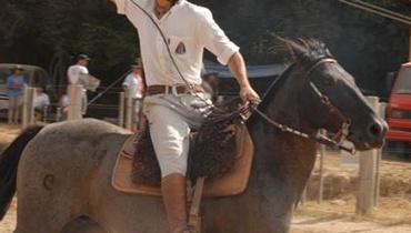 Equídeo Equino Crioulo Registrado Cavalo Zaina Trabalho - Pastar Imagens