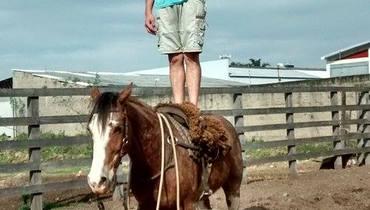 Equídeo Equino Crioulo Não Registrado Cavalo Alazã Trabalho - Pastar Imagens