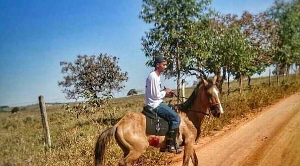 Equídeo Equino Campolina Não Registrado Cavalo Baia Marcha Picada - Pastar Imagens