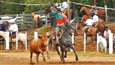 Equídeo Equino Diversos Não Registrado Égua Rosilha Corrida - e-rural Imagens