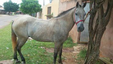 Equídeo Equino Diversos Comunicado Cavalo - Pastar Imagens
