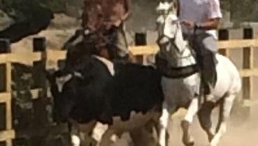 Equídeo Equino Quarto de Milha Não Registrado Cavalo Tordilha Corrida - Pastar Imagens