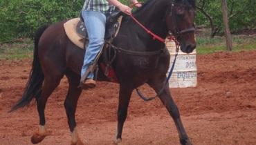 Equídeo Equino Quarto de Milha Registrado Cavalo Castanho Corrida - Pastar Imagens