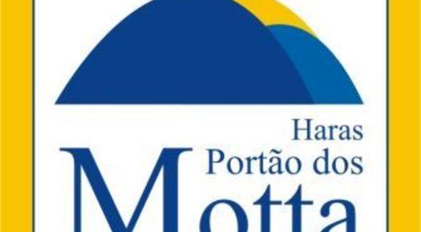 Equídeo Equino Mangalarga Marchador Registrado Potro Castanha Marcha Batida - e-rural Imagens