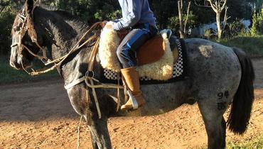 Equídeo Equino Crioulo Registrado Cavalo Castanha Trabalho - Pastar Imagens