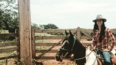 Equídeo Equino Mangalarga Marchador Não Registrado Cavalo Pampa Marcha Picada - Pastar Imagens