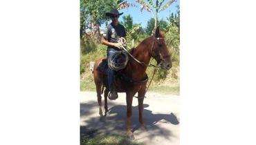 Equídeo Equino Mangalarga Não Registrado Cavalo Alazã - e-rural Imagens
