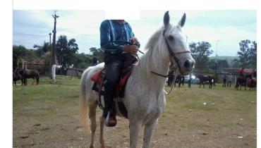 Equídeo Equino Mangalarga Não Registrado Cavalo Tordilha Marcha Picada - Pastar Imagens